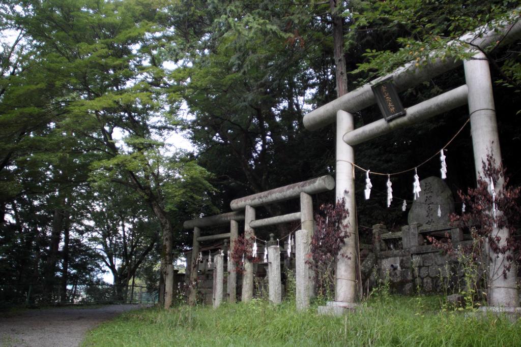 郊戸八幡宮今宮神社の境内に並ぶ鳥居