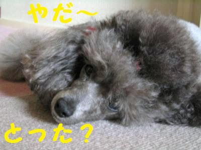 犬ブログ用 004