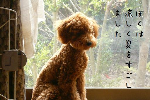 小太郎の夏