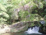 仁保の藤とミニ滝