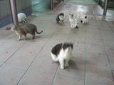 出てくる出てくる猫