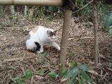 後楽園のネコ
