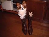 ブーツ履いた犬