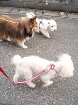 三匹のお散歩