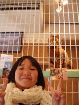 猫屋敷の看板猫