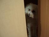 何で、入れないの?
