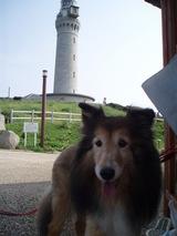 角島灯台とアン