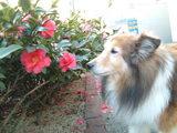 春の匂いだ