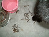 犠牲者(鳥)