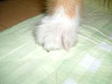 アンちゃんの手