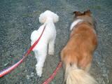散歩♪散歩♪