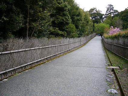 京都・お花見つあー。 古柴垣