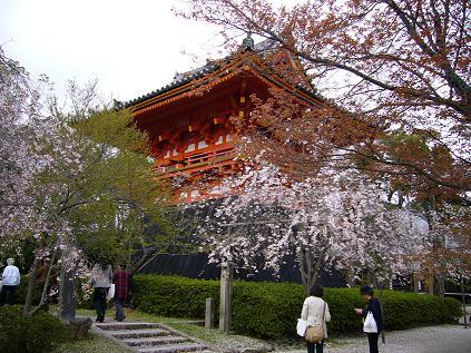 京都・お花見つあー。 仁和寺