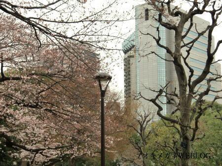 墨田区役所と桜