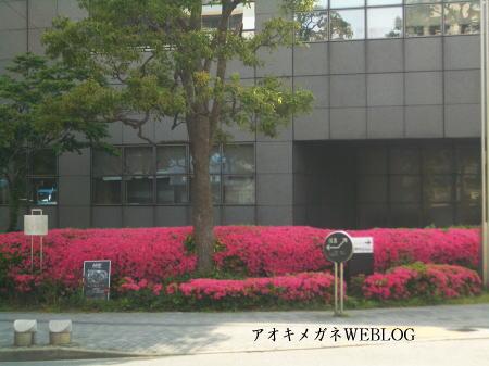 墨田区役所のツツジ