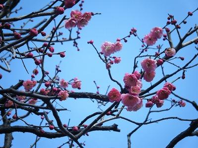 2010_0221川越0006