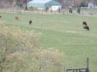 見ろ!牛がゴミのようだ!!