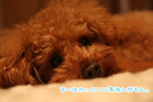 001_20081222205745.jpg