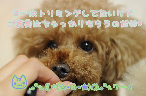 008_20090529225950.jpg