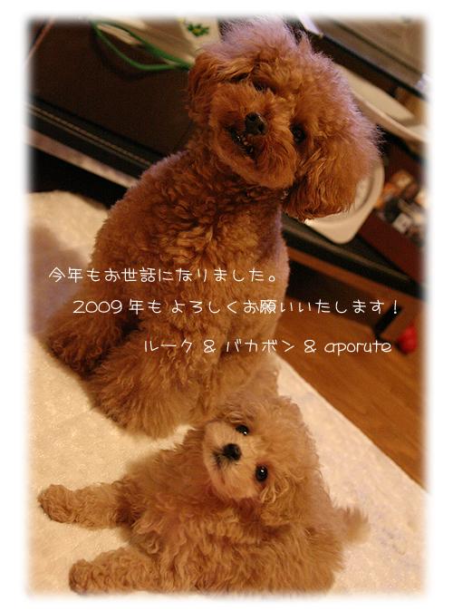 036_20081229155839.jpg