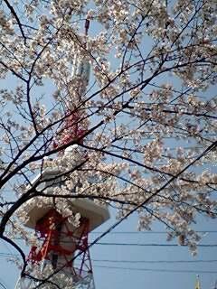 2008年お花見02