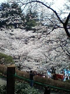 2008年お花見01