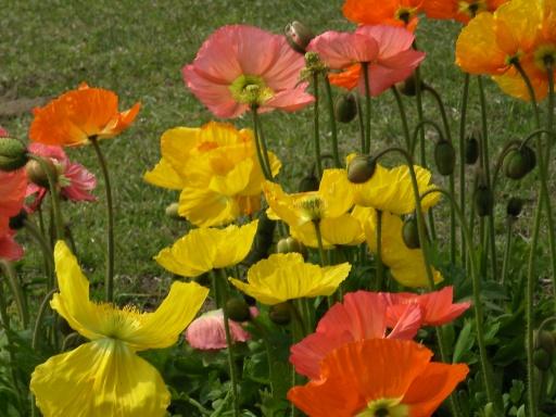 FloralColors14.jpg