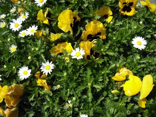 FloralColors8.jpg