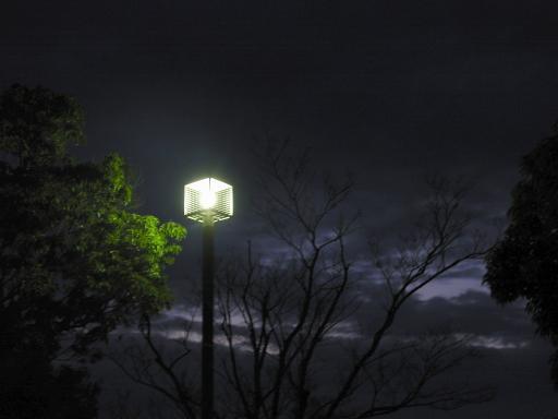NightWander11.jpg