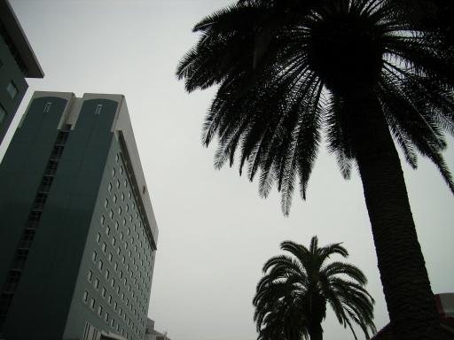 宮崎観光ホテル前