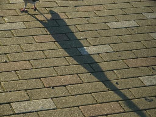 ShadowBird.jpg