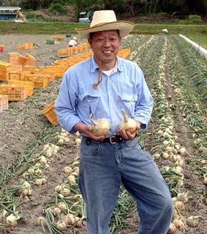 殆ど肥料を使わない成井さんのタマネギ畑