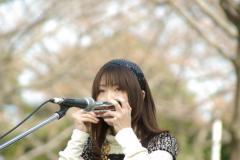 yanagawa12.jpg