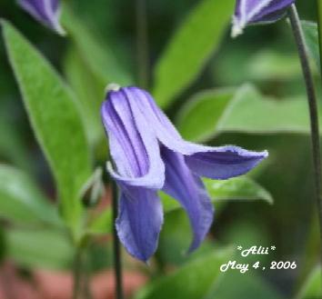 2006-5-4-1.jpg