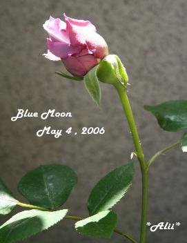 bm2006-5-4-1.jpg