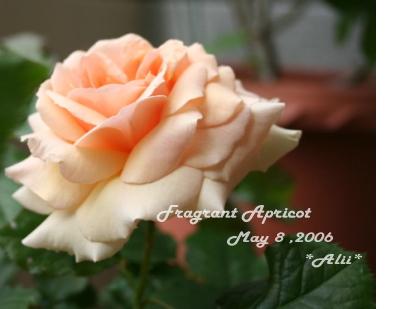 fa2006-5-8-1.jpg
