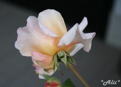 ga2005-11-12-2.jpg