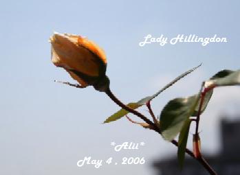 lady2006-5-4-1.jpg