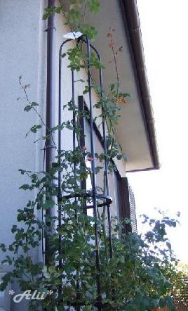 sc2005-11-1.jpg