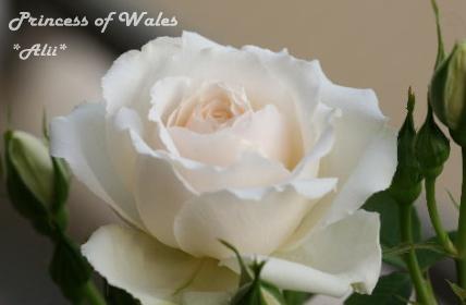 wales2006-5-14-1.jpg