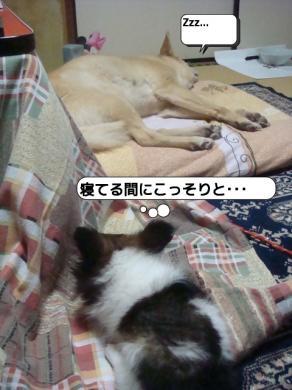 20090422_233714.jpg