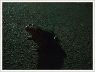 冬眠から覚めたカエル