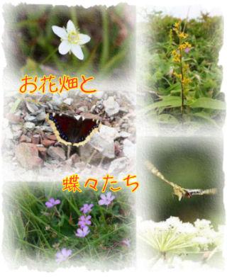 IMG_22613111.jpg