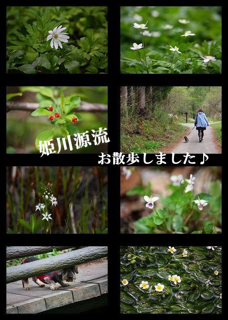 himekawa111.jpg