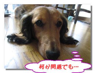 hitoriasobi5_20080916032705.jpg