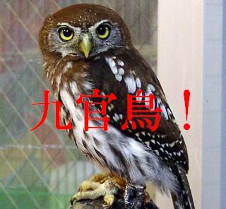 suzume21.jpg