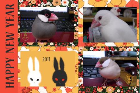 2011-1.jpg