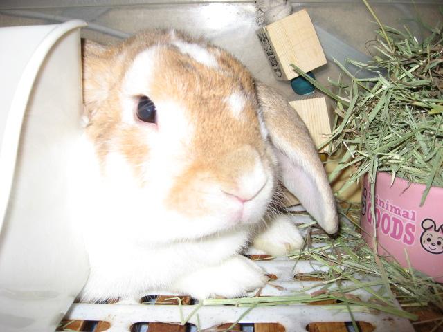 ウサギの噴ピョン
