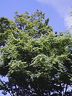 舞岡公園木