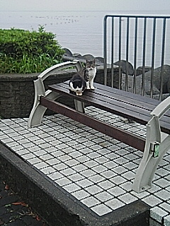 小山臨海公園猫